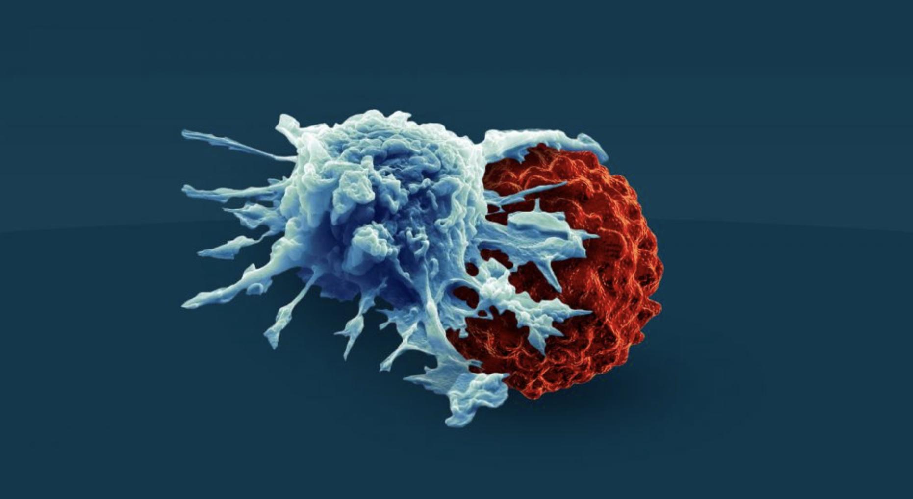 最新综述!Nature:癌症免疫疗法下一步是联合治疗,根除肿瘤不是最终目标