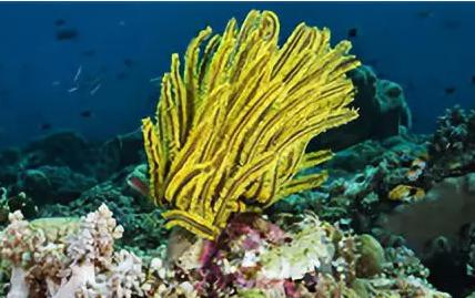 曲贝替定:首个来源于海洋的抗肿瘤药物