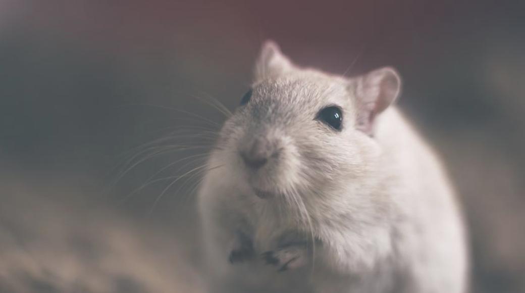 阿诺医药在2019日本肿瘤内科学会年会(JSMO)上发布AN9015(CSF-1R/c-kit抑制剂)动物模型数据