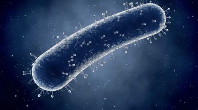 Cell+Science力证:细菌与癌症密切相关,抗生素有望抗癌!